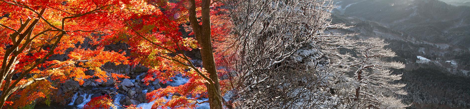 あぶくま里山王国スライドショー画像秋と冬